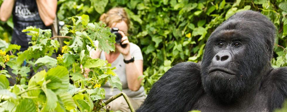 Trek za gorilami vyžaduje dodržování pravidel