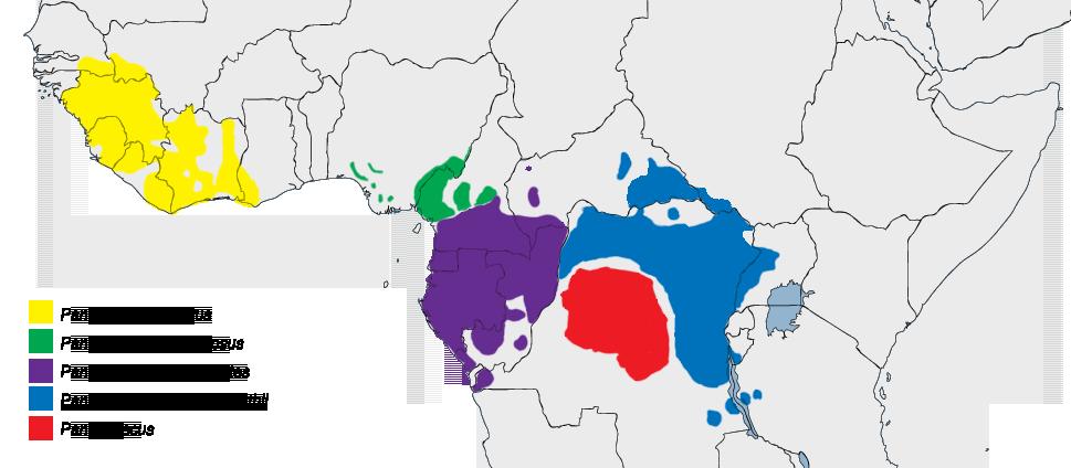 Výskyt šimpanzů v Africe