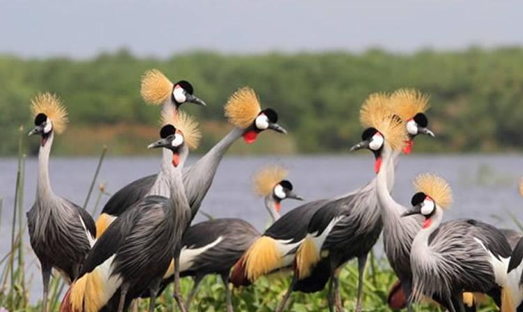 Národní park Queen Elizabeth je domovem mnoha krásných ptáků
