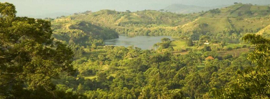 Národní park Kibale forest