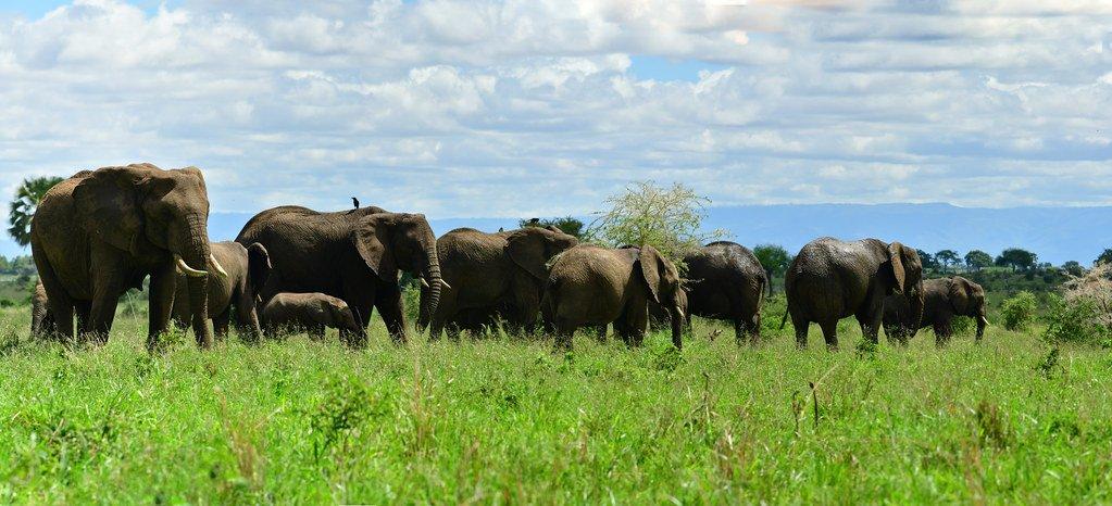 Národní park Kidepo Valley nabízí výborné pozorování slonů