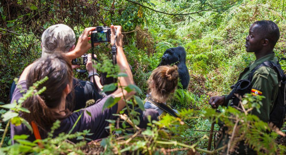V parku Mgahinga je jedna habituovaná gorilí rodina