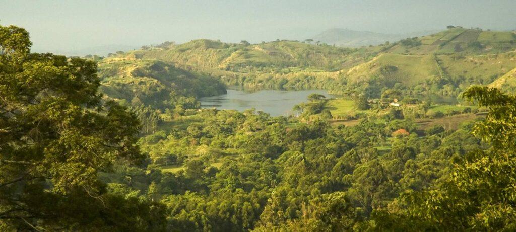 Prales v národním parku Kibale Forest
